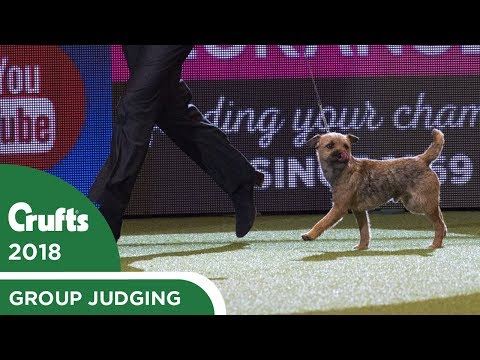 Eukanuba Pup of the Year | Crufts 2018