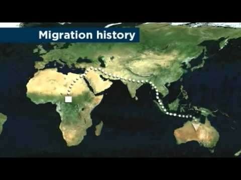 Aboriginal DNA provides human migration clues