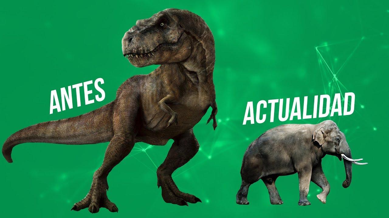Porque En La Actualidad No Hay Animales Tan Grandes Como Los Dinosaurios Youtube El reino animal, características y clasificaciones. porque en la actualidad no hay animales tan grandes como los dinosaurios