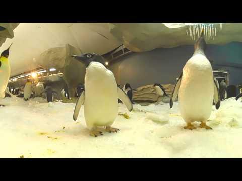 Antarctica: Empire of the Penguin 360 View | SeaWorld Orlando