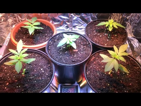 My First Weed Grow - Day 23 - Growth