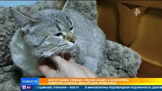 Фотографии спящих рядом кошек и волонтёра помогли собрать деньги для животных