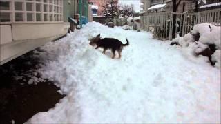 初めて雪の上を歩きました。 Kuppa walked on snow for the first time.