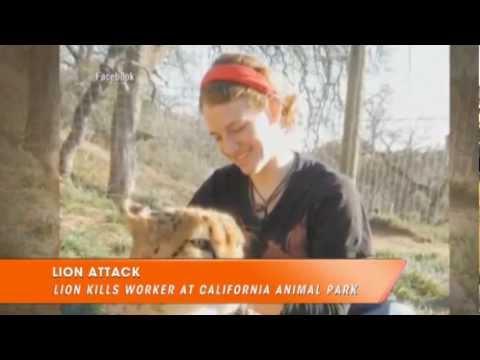 Lion Kills Intern at California Animal Park