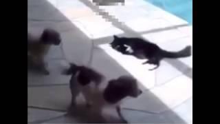 كلب يهايط على بس واكله زق هههههه