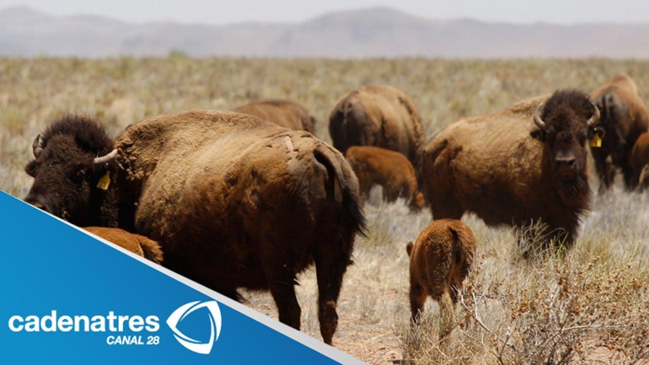 El bufalo de la noche 2007 - 5 10