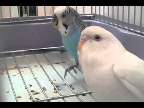 307f67aa8 اصوات طيور الحب - YouTube