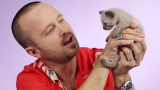 Aaron Paul Plays With Kittens While Answering Fan Questions