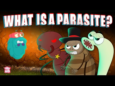 PARASITE   What Is A PARASITE?   Biology For Kids   The Dr Binocs Show   Peekaboo Kidz