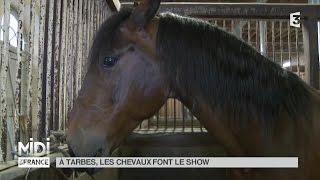 ANIMAUX : À Tarbes, les chevaux font le show