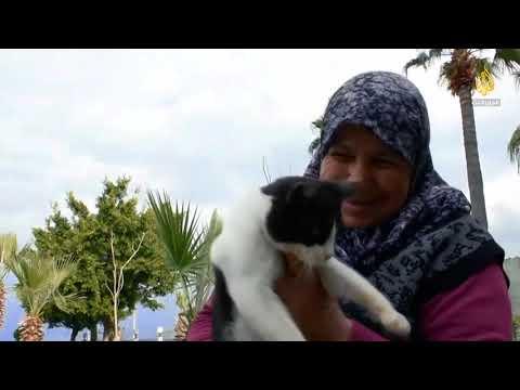 اهتمام الأتراك برعاية القطط.. أكبر من مجرد الألفة والتسلية  - نشر قبل 23 دقيقة