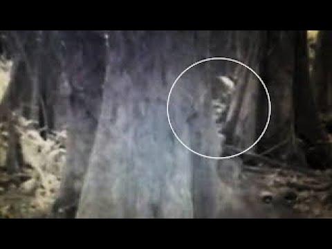 Trail Cameras and Sasquatch.