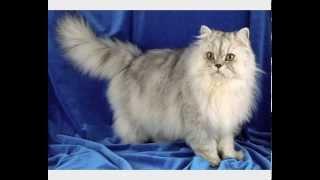 Купить корм для кошек новосибирск
