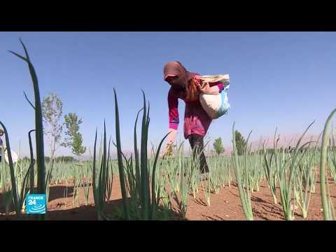 لبنان: 75 بالمئة من الأطفال السوريين يعملون في قطاع الزراعة بظروف شاقة  - نشر قبل 33 دقيقة