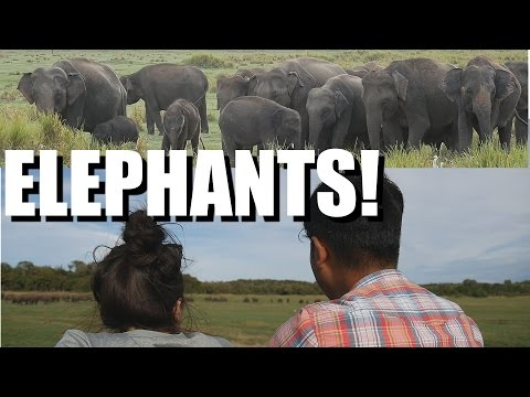 Sri Lanka Travel - What to do? DAMBULLA, ELEPHANTS, & HOPPERS