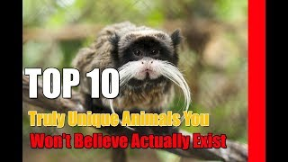 Top 10 Truly Unique Animals You Won't Believe Actually Exist