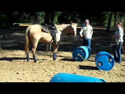 HSSPCA Challenge for a Cause Barrel Drag Obstacle ...