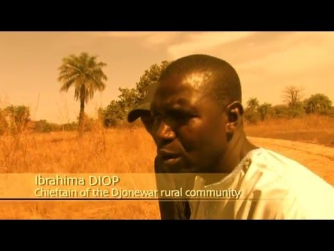 The Gambia cruise around the world (Documentary, Discovery,