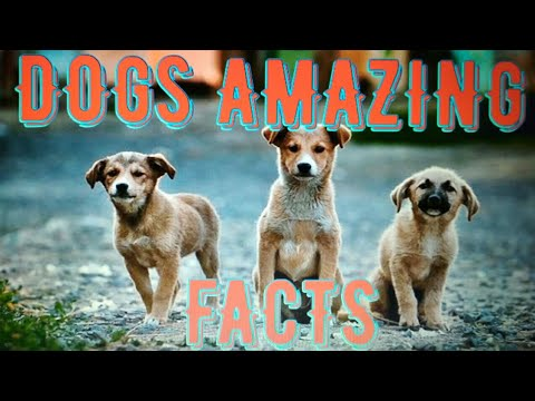 DOGS AMAZING FACTS l 21 Dog Amazing Facts l Puppy l Cute PUPPY l PUPPIES