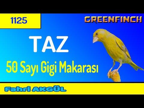 F.A. - TAZ 04 (Greenfinch)