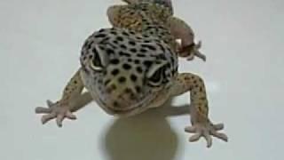 物凄く大人しくて、目が蛇によく似ています。 名前は「次郎ちゃん」って...