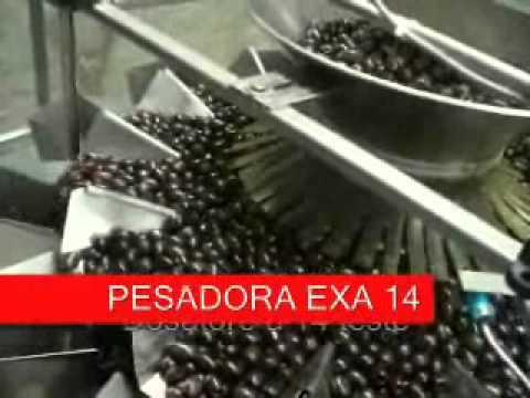 Envasado de olivas en latas de 2,5 kg