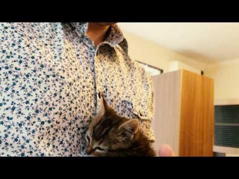 Как приручить кошку дикую