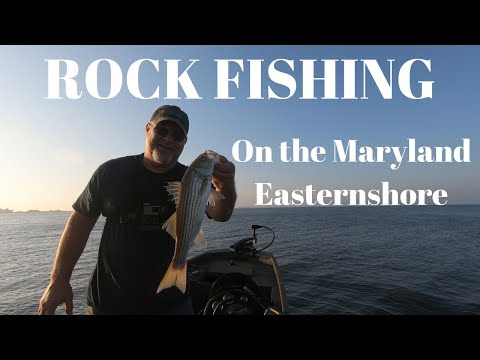ROCK FISHING! ON THE EASTERN SHORE OF MARYLAND