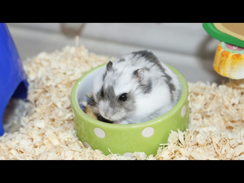CLEANING MY HAMSTER CAGE  LIVING WORLD ECO HABITAT