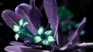 Robert Babicz - Beautiful (Day Mix)