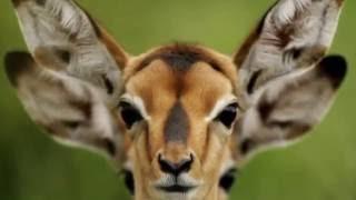 Смешные животные фото