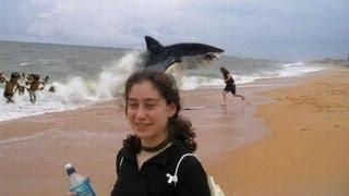 German Backpacker Shark Attack On Australian Beach : real or fake?