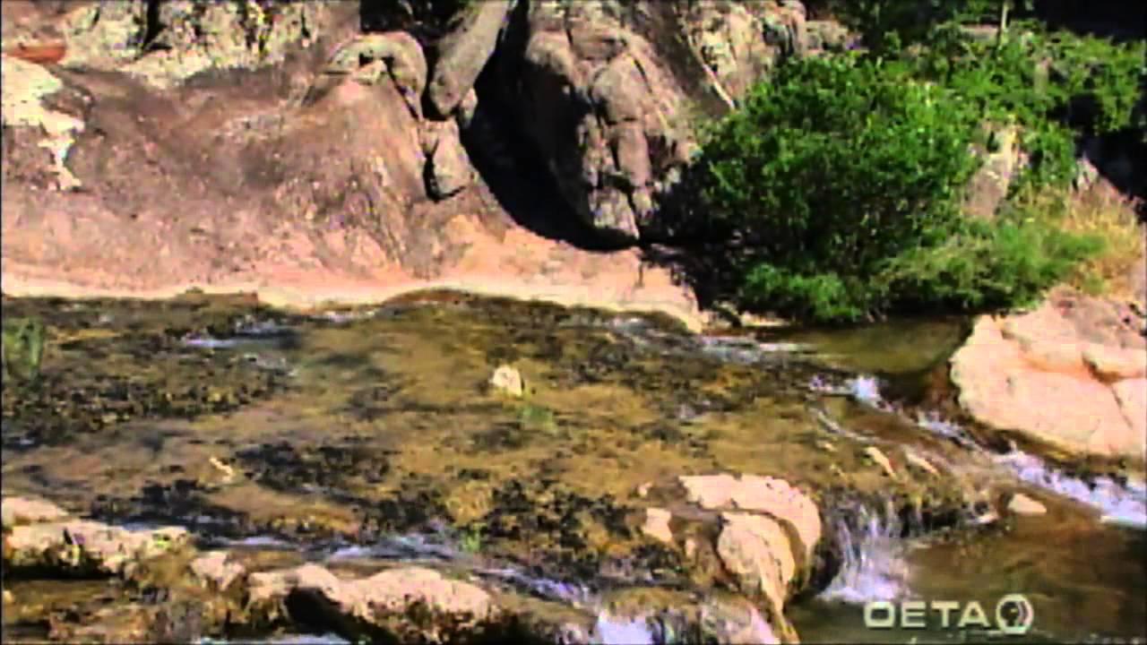 Native Plants of South Central Oklahoma - YouTube
