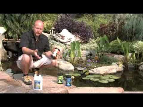 Pond maintenance youtube for Koi pond upkeep