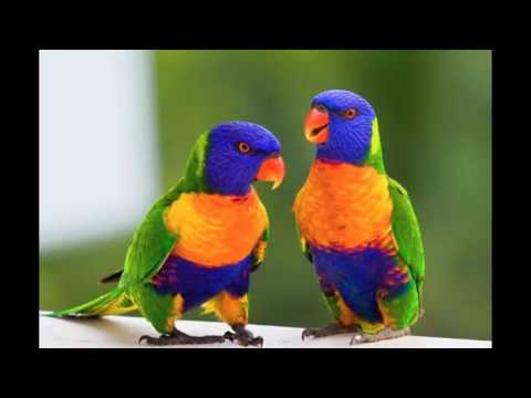 parrot demonstrates his crazy moving pictures