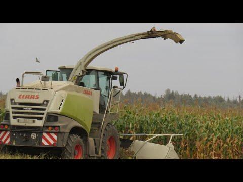 [Уборка кукурузы] CLAAS Jaguar 850   МАЗ 5516, 5551   БЕЛАРУС 1221 + ПС-45   КАМАЗ