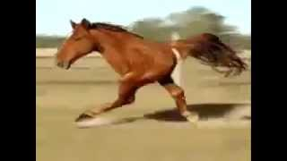 2 legged horse