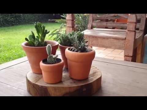 5 ideias para decorar com bolacha de madeira | Dicas de decoração rústica