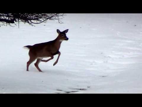 Run Run Rudolph Dashing Through The Snow