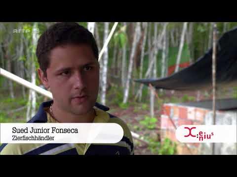 Xenius Aquariophilie : les poissons exotique de l'amazonie à nos aquarium