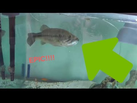 HOW TO clean fish tank filters | Feeding PET BASS