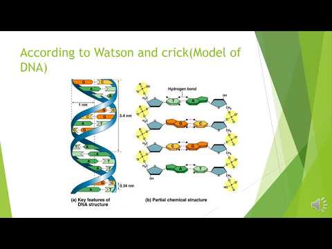 Structure and chemical composition of DNA