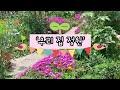 [힐링영상] 우리 집 정원 잠시 쉬어 가세요~ 여유로운 독일 일상 Healing video