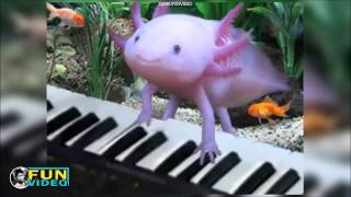 AXOLOTL cute pets compilation