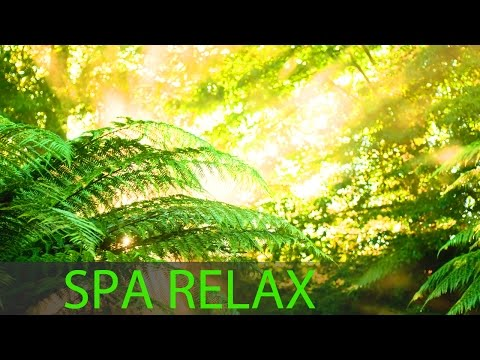 8 Hour Meditation Music: Relax Mind Body, Spa Music, Background Music, Massage Music ☯218