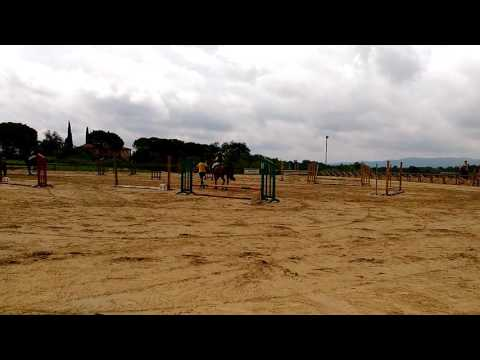 without trust...     disaster in horse show jumping