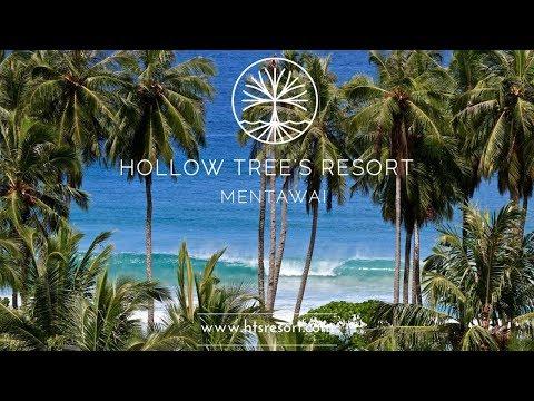 Beginner's Surf Trip At Hollow Tree's Resort