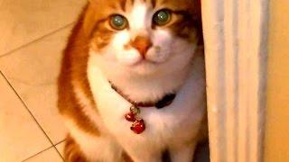 帰宅を大歓迎してくれる猫  鳴きながらお帰りコール連発!Cat Welcomes Owner Home Everyday thumbnail