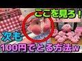(店員困惑)100円でぬいぐるみが取り放題になるクレーンゲームがヤバすぎるw(UFOキャッチャー)Japanese Claw Machine