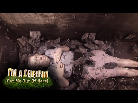 Harry's Dice With Danger Down Under | I'm a Celebrity... Get Me Out of Here!